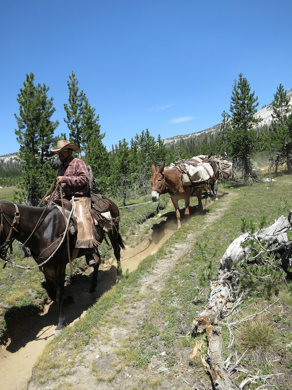 Mule train on the way to Cathedral Pass.