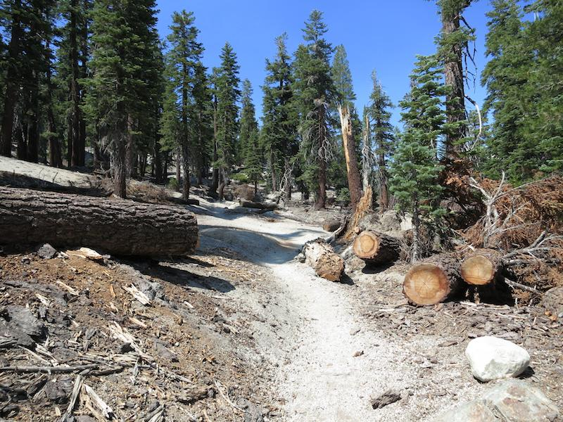 Blowdowns cleared off the trail near Reds Meadow.