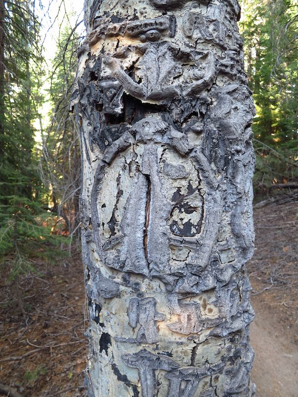 What do you see on this carved tree? A peace sign? Yeah, me neither.