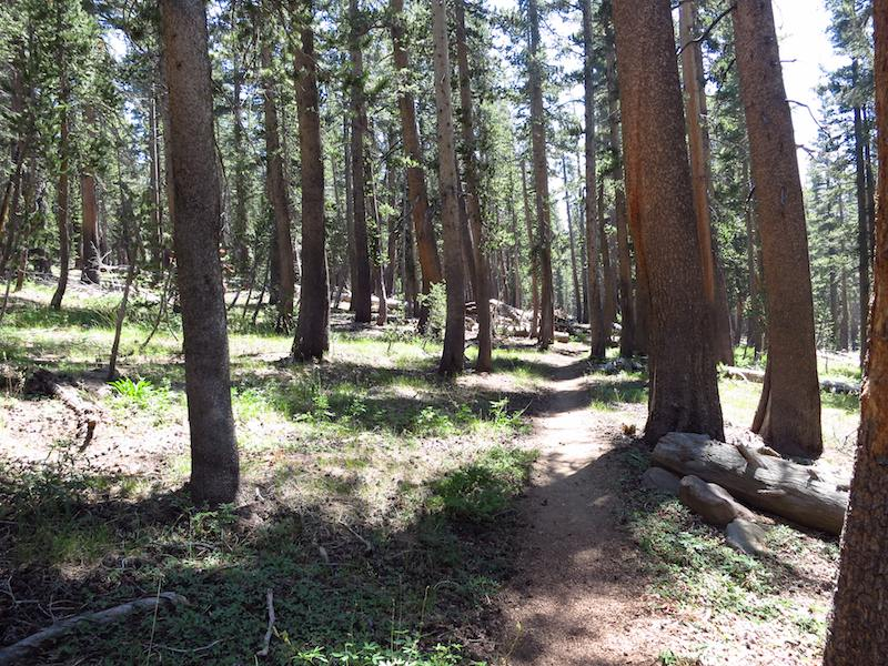 """Shady"" woods along the JMT south of Lake Edison."