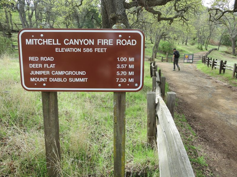 Mitchell canyon fire road in Mount diablo state park