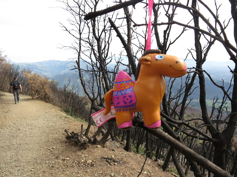 toy hanging in tree on summit trail