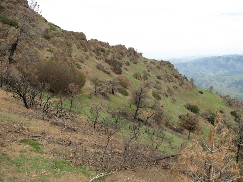 north peak trail in mount diablo state park