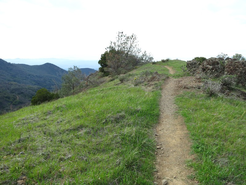 grassy crest on trail in mount diablo state park