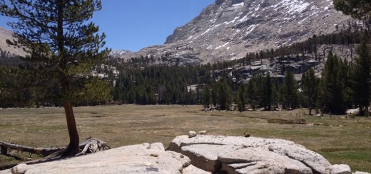 Crabtree Meadows, with a marmot on the rock.