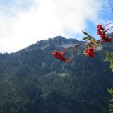 redBerriesForestedMtns